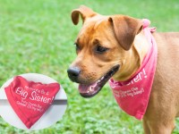 A Pregnancy Announcement Dog Bandana (And The Meaning Of Freya's Name)
