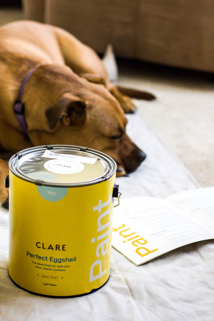 clare-paint-can-by-dog
