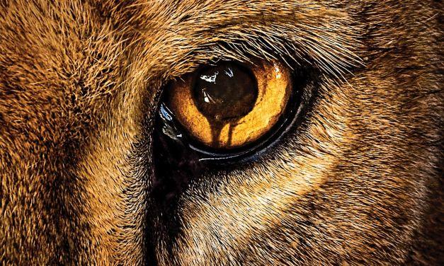 Zoo : le livre qui a inspiré la série TV