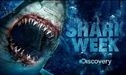 [Shark Week] Une semaine sous le signe du requin
