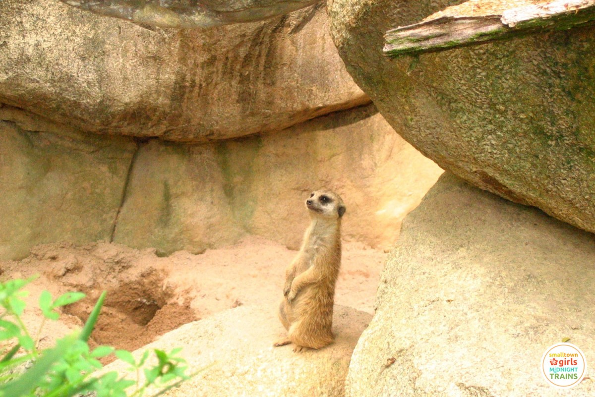 And then we went to see a meerkat.