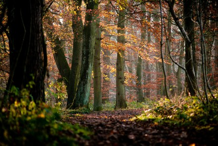 Skipton Woods | Image by James Whitesmith | CC BY-ND 2.0