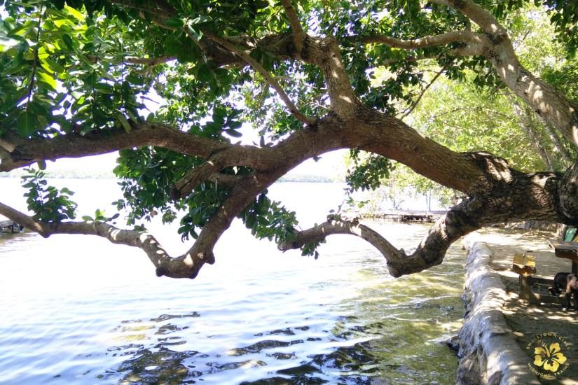 Camotes_Cebu_Lake Danao_06