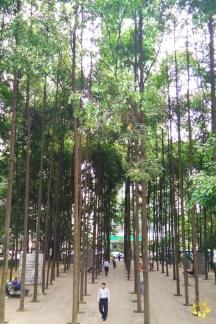 Petronas Towers Woods 02