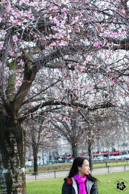 13_VR_under a cherry blossom tree in paris