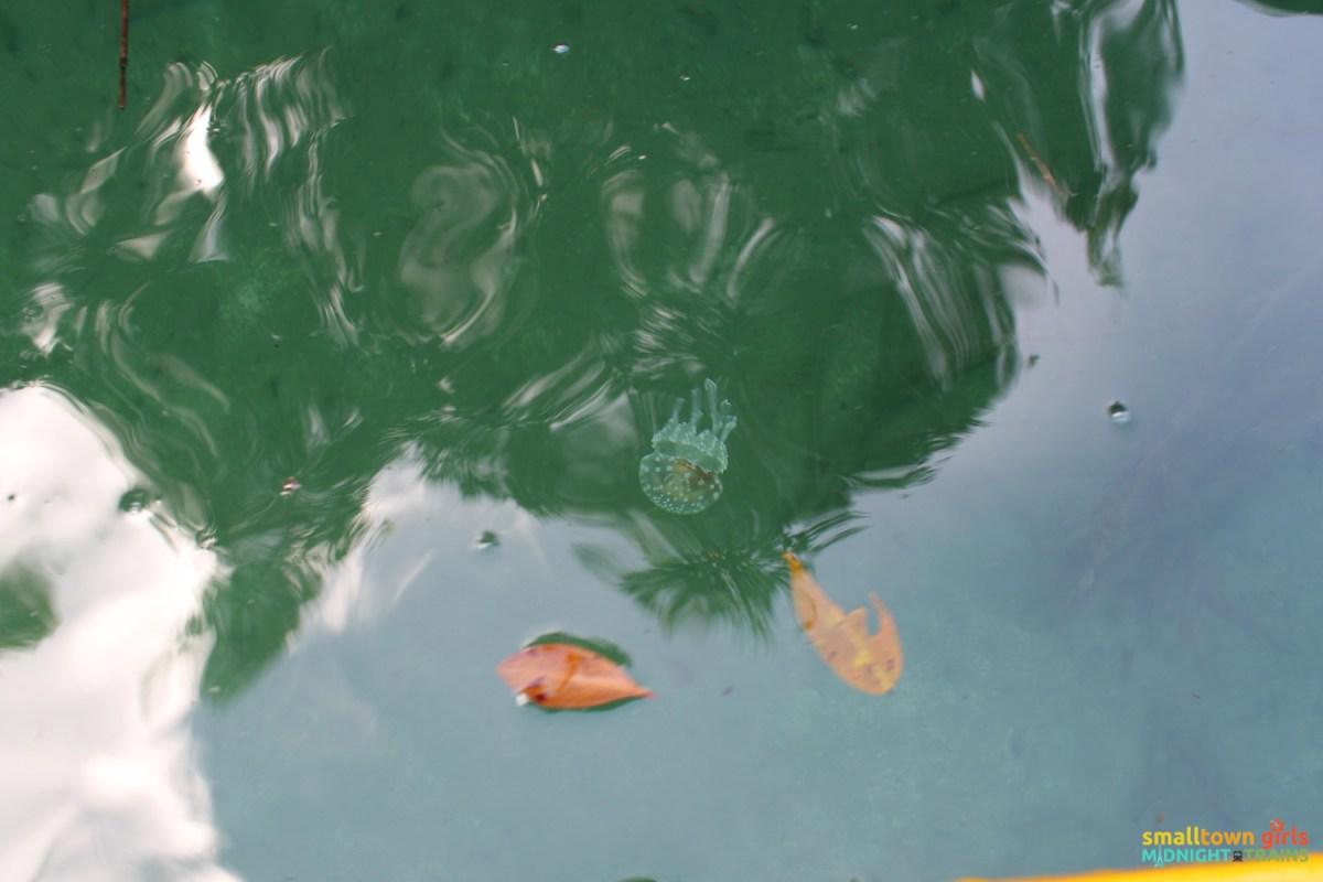SGMT_Philippines_Siargao_Sohoton_Jellyfish Lagoon_Clear