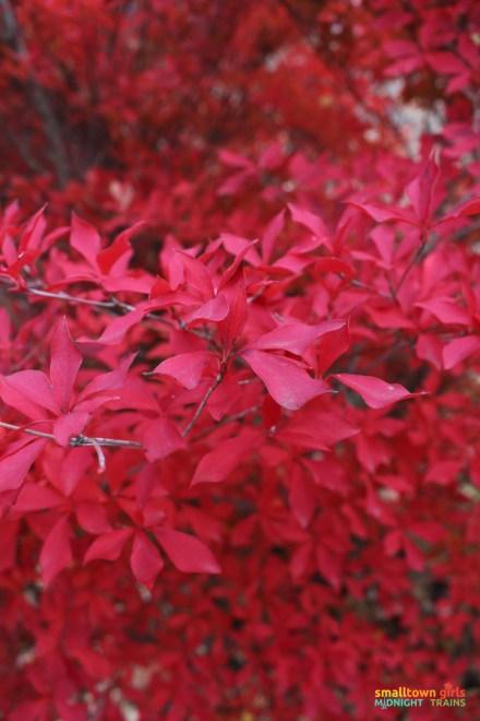 SGMT Japan Fall Foliage 01