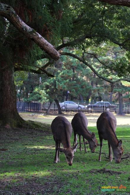 SGMT Japan Nara 09
