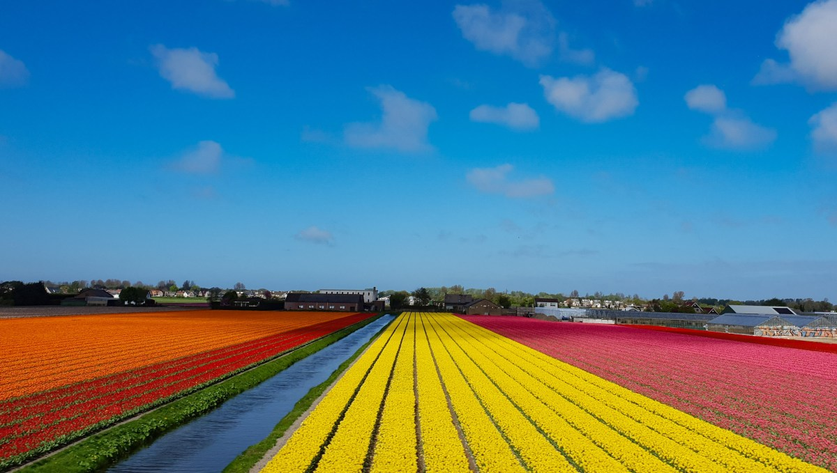 SGMT | Train to Leiden | Tulip fields
