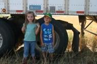 Wheat Harvest 2013