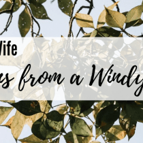 Lessons from a Windy Day