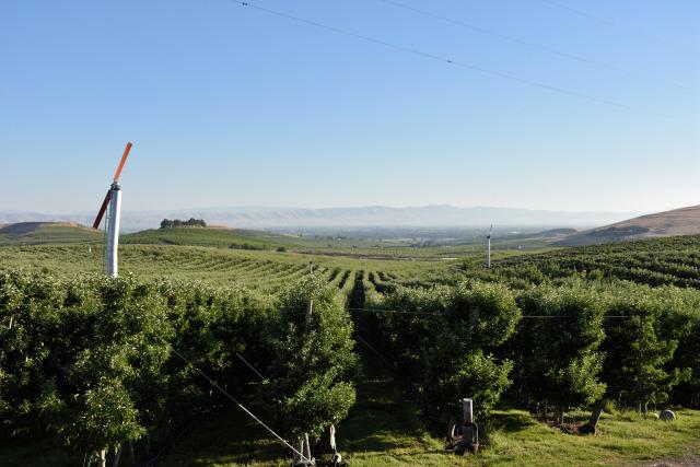 Vineyards in the Rattlesnake Hills in Washington.