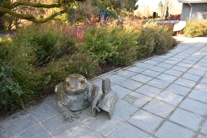 Sculpture of a frog at the Bellevue Botanical Gardens.