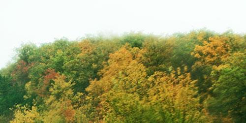 foggy-treetops