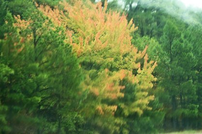 peachy-leaves