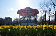 Halifax Public Gardens in May bandstand and daffodils