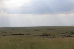 Naibor - migration