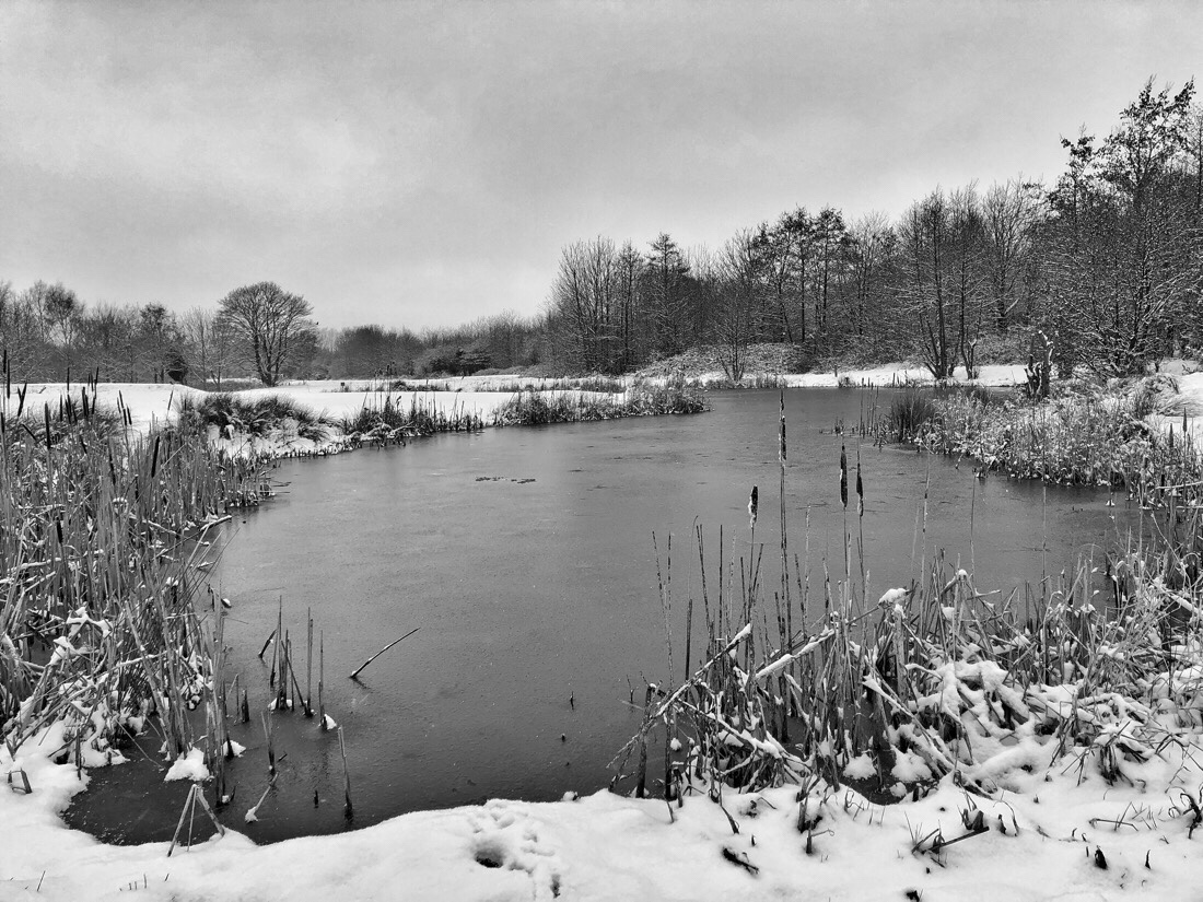 Snow at the lake on Bootle golf course in merseyside