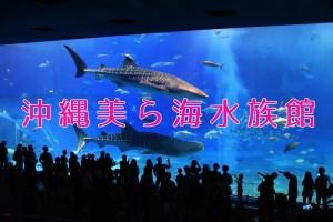 【沖縄】ジンベイザメの巨大水槽は超圧巻!沖縄美ら海水族館