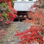 【紅葉】高雄山の神護寺、金堂と石段を彩る紅葉は風情あり!