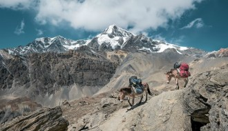 Travel picture - donkeys on a mountain - Simon Matzinger/Unsplash - SmarketryBlog.com