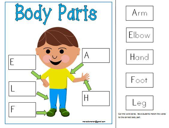 Worksheets On Body Parts For Preschool
