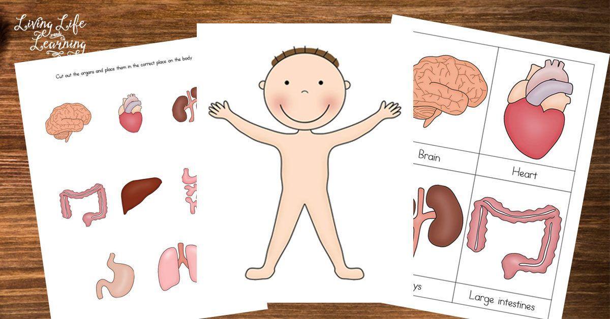 Preschool Worksheets My Body 2