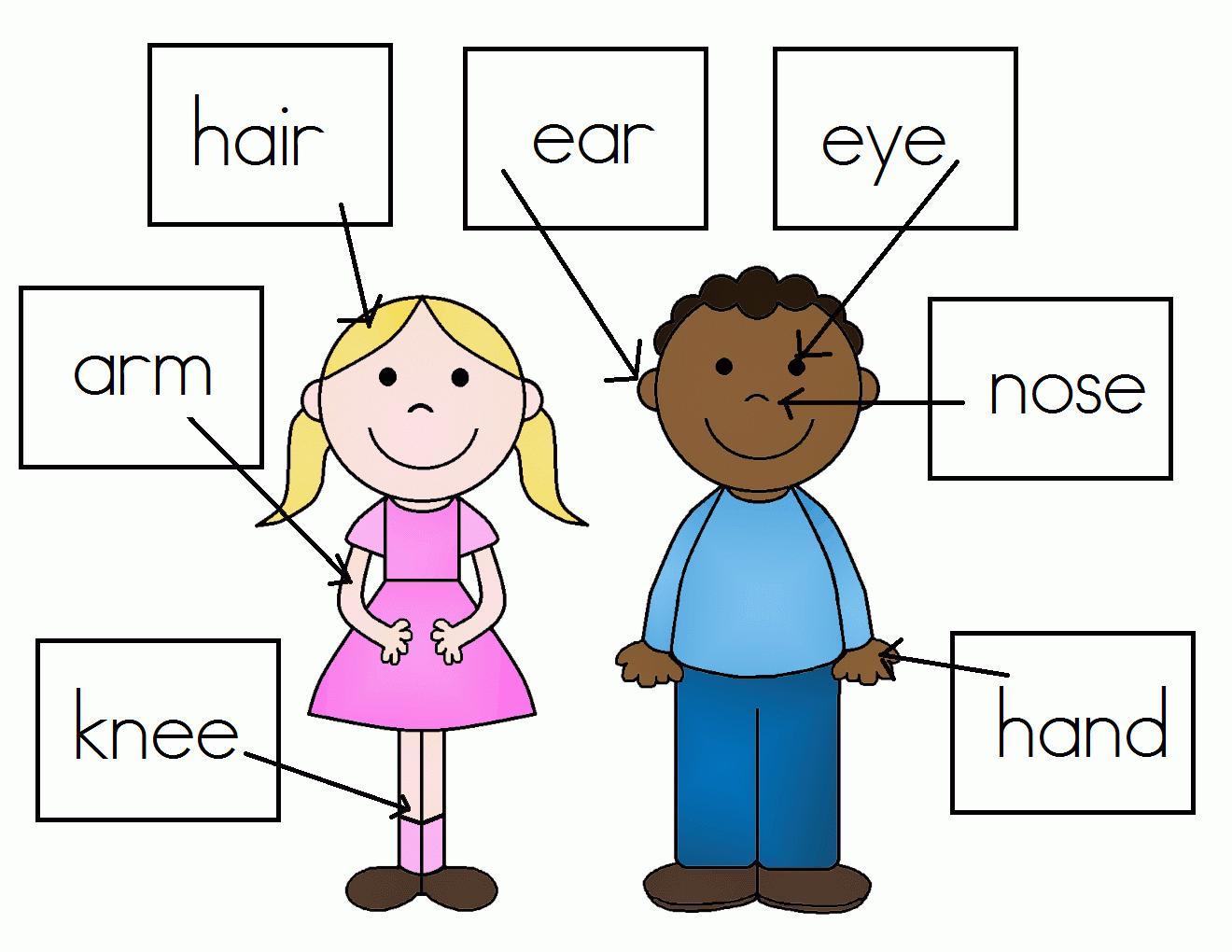 Preschool Worksheets My Body 7