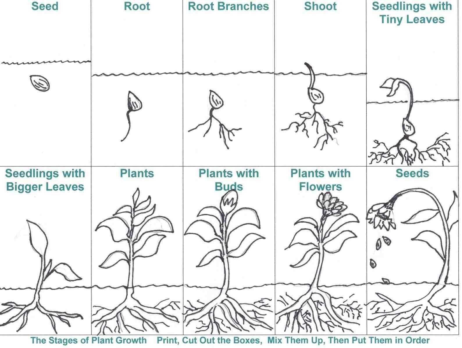 Preschool Worksheets On Plants 4