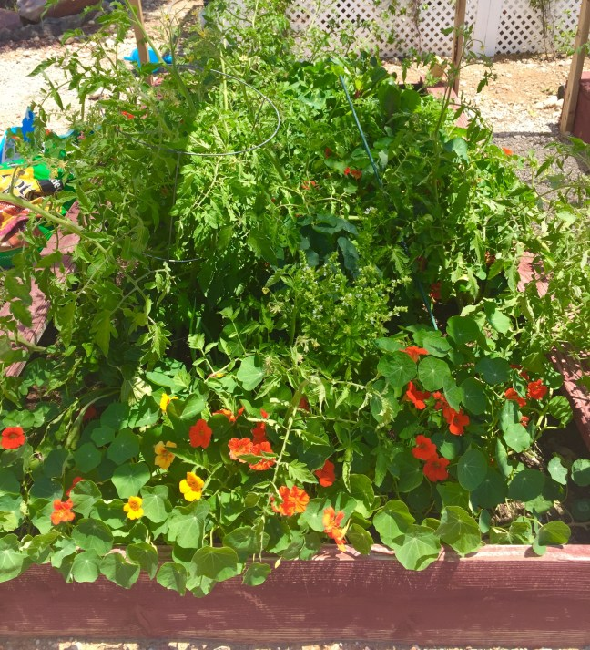 Vegetable gardening made simple for those of us who don't have a green thumb
