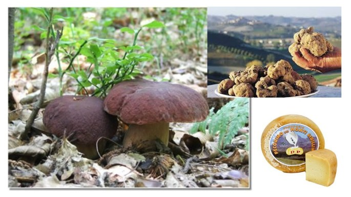 funghi sibillini tartufi