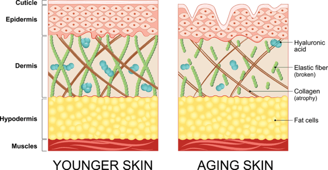 younger-older-skin