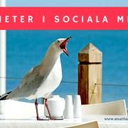 nyheter sociala medier