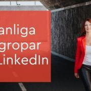 fallgropar linkedin