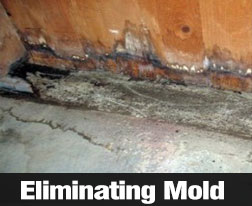 How To Spot And Treat Mold In Homes