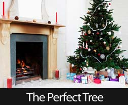 Picking The Perfect Holiday Tree