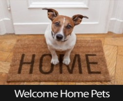 Tips For Buying A Home That Your Pets Will Love