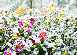Winter's Coming: Learn How to Prepare Your Plants, Trees and Other Landscaping