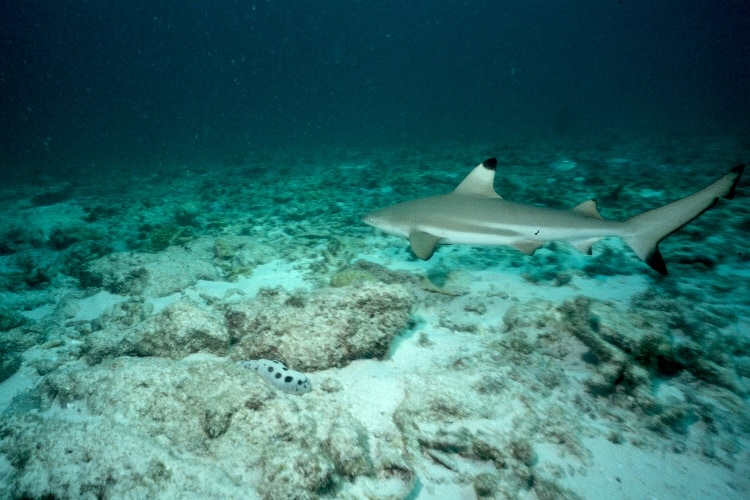 My Scuba Diving Tour Date With A Blacktip Reef Shark