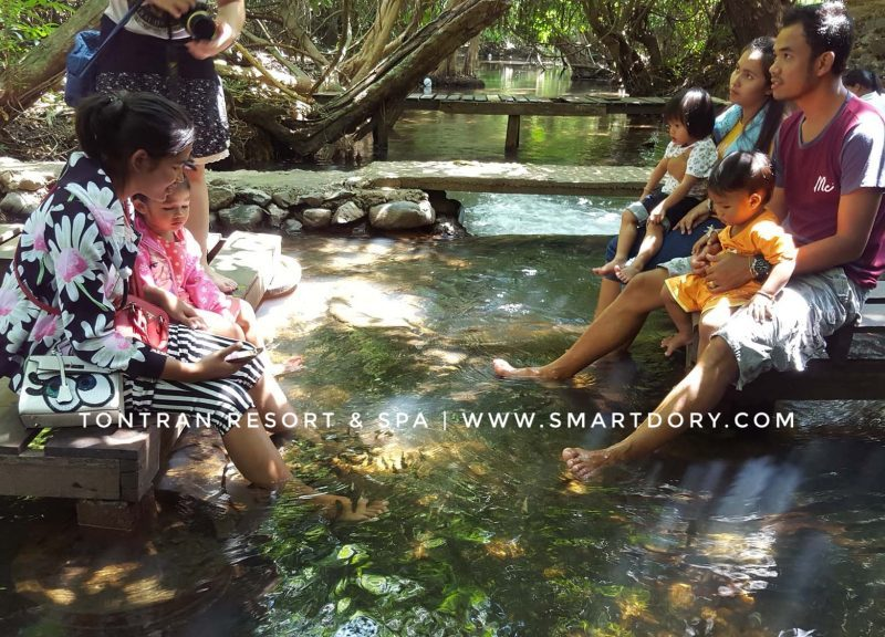 Natural Fish Spa Day In The River Khanom, Thailand