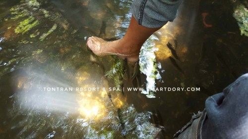 Most people are ticklish to put their feet in the river with fish.