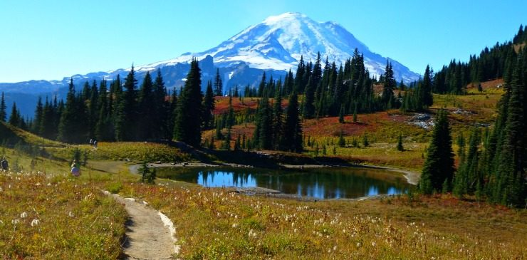 Washington Estado (Flora e fauna)
