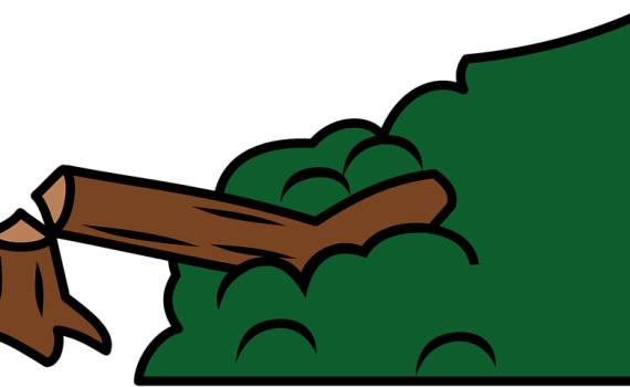 Deforestation - Summary, Questions, Causes, Effects, Consequences and Solutions 8