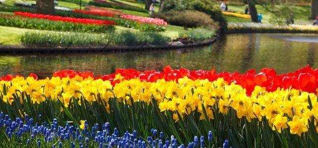 The Daffodils By William Wordsworth- Summary and Questions Answers