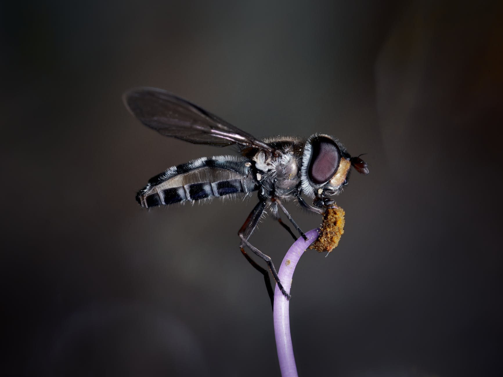 I heard a Fly Buzz When I Died by Emily Dickinson : Summary, Analysis and Questions 2