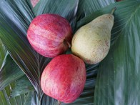 Apfel-Birne-Smoothie