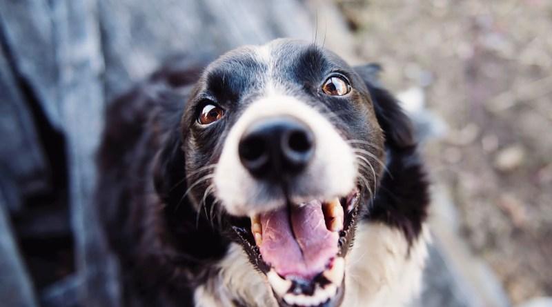 best mental stimulation games for dogs