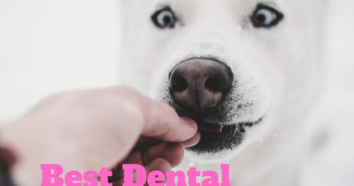 Best dental treats for dogs