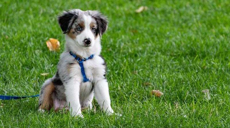 what to buy when getting a puppy