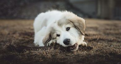 best rawhide for puppies
